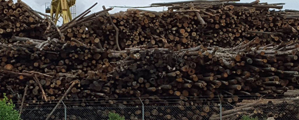 Is Your Retirement Fund Promoting Burning Forests For Electricity?