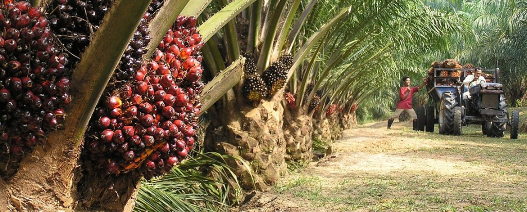 PepsiCo, McDonald's, Nestle Bringing Conflict Palm Oil to Market