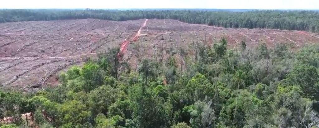 quartz-deforestation-video