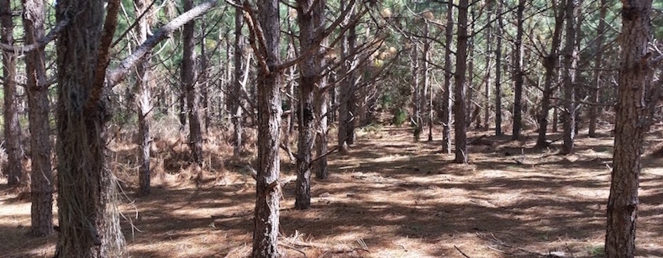 """New Report: """"Real"""" vs. """"Fake"""" Forests: Why Tree Plantations Are Not Forests"""