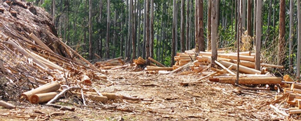 trees-plantations