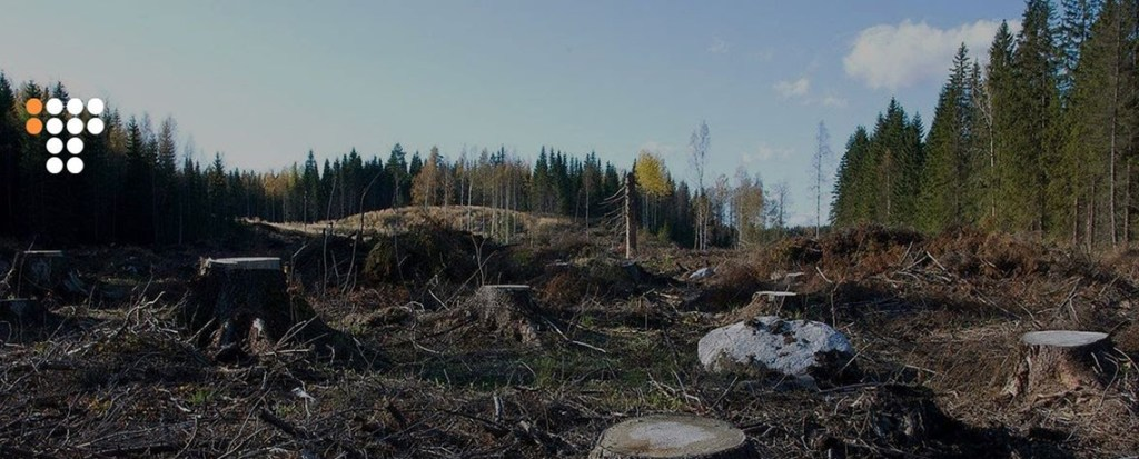 WATCH: Exposing Illegal Deforestation in the Carpathians