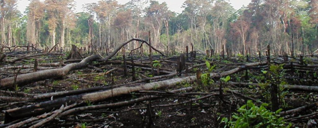 Tropical Forests No Longer 'Carbon Sinks'; Deforestation, Land Degradation to Blame