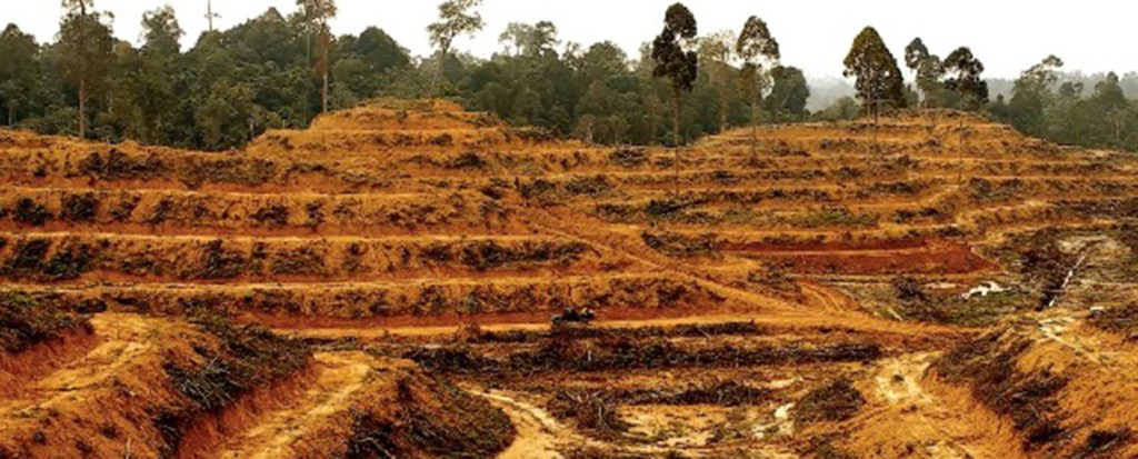Ongoing Forest Clearance by Palm Oil Industry Threatens Livelihood for Millions