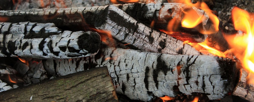 Petition: Burning Wood for 'Green' Power? No Thanks!