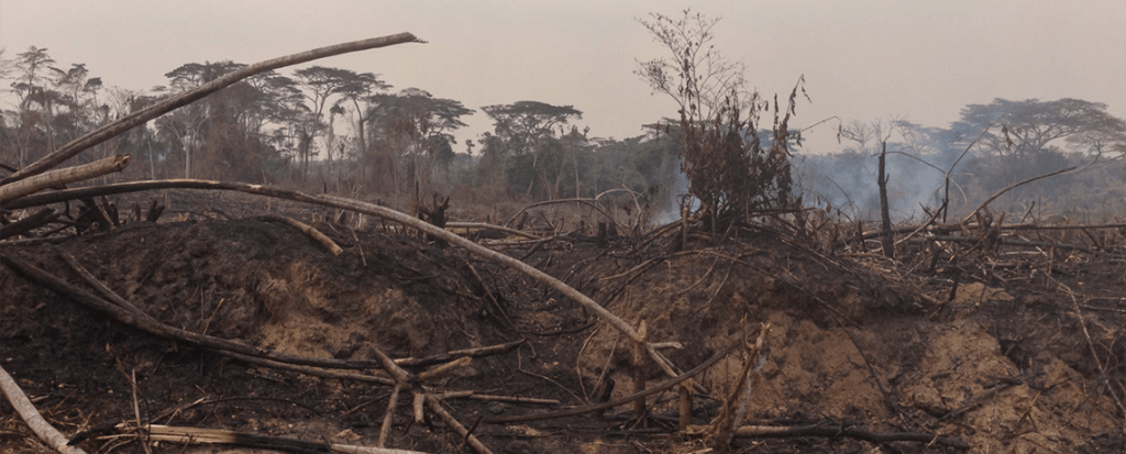 Successful Forest Protection in DRC Hinges on Community Participation