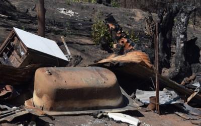 Organizational Sign Ons Needed to STOP GE Eucalyptus – JULY 5 Deadline
