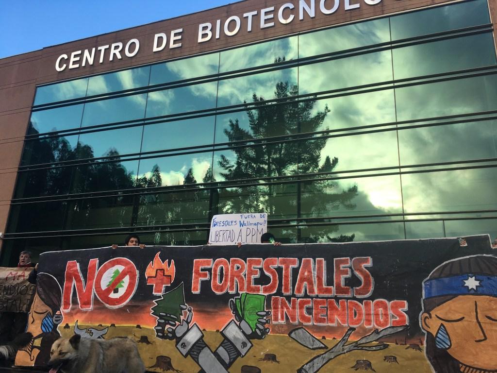 """""""Funan"""" a Universidad de Concepción por favorecer el negocio forestal"""
