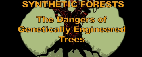 Synthetic Forests - A Documentary About the Dangers of GE Trees