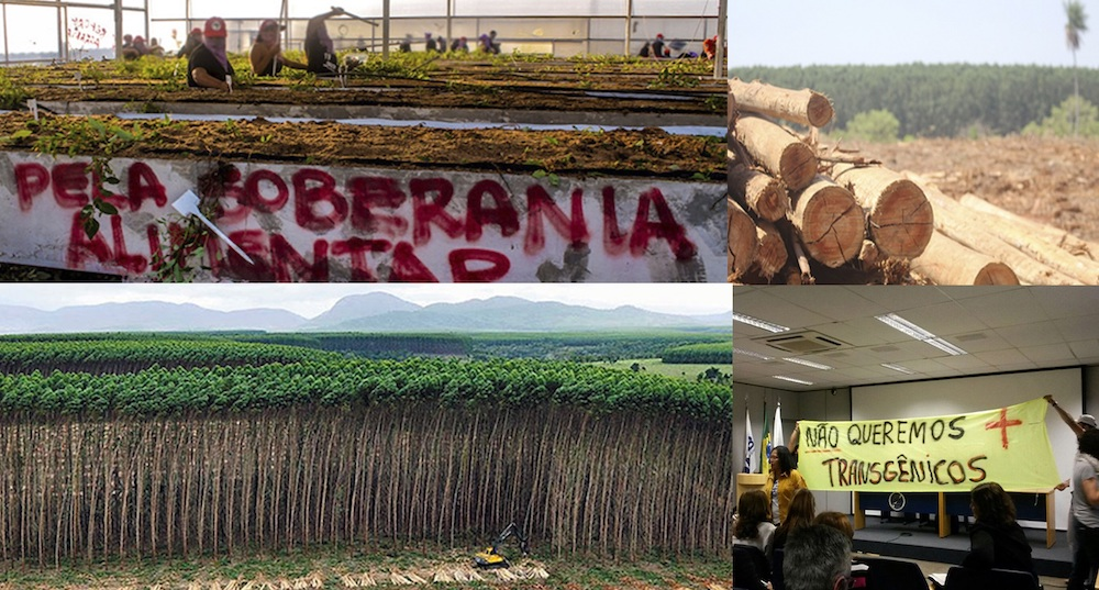 Org. Sign On! Brazil Groups Say Plantations Are Not Forests!