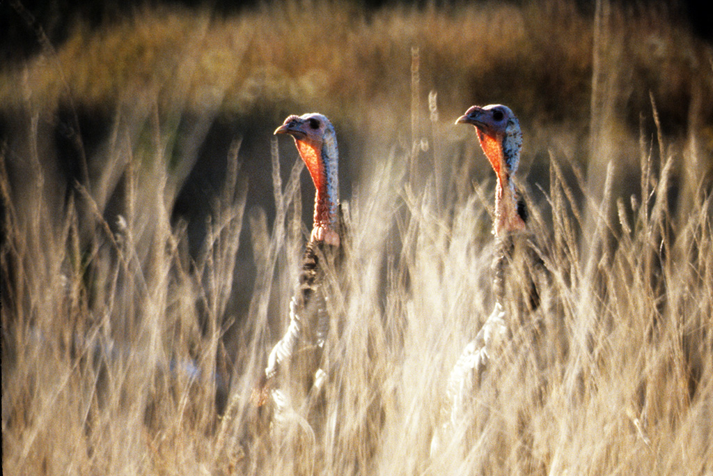 Trump Moves to Allow GMO Crops in Wildlife Refuges