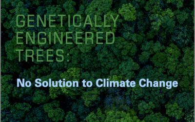 Press Release 8 Sept: Groups Condemn Use of GE Trees in Fake Climate Schemes (ENG, SP, FR, PO)
