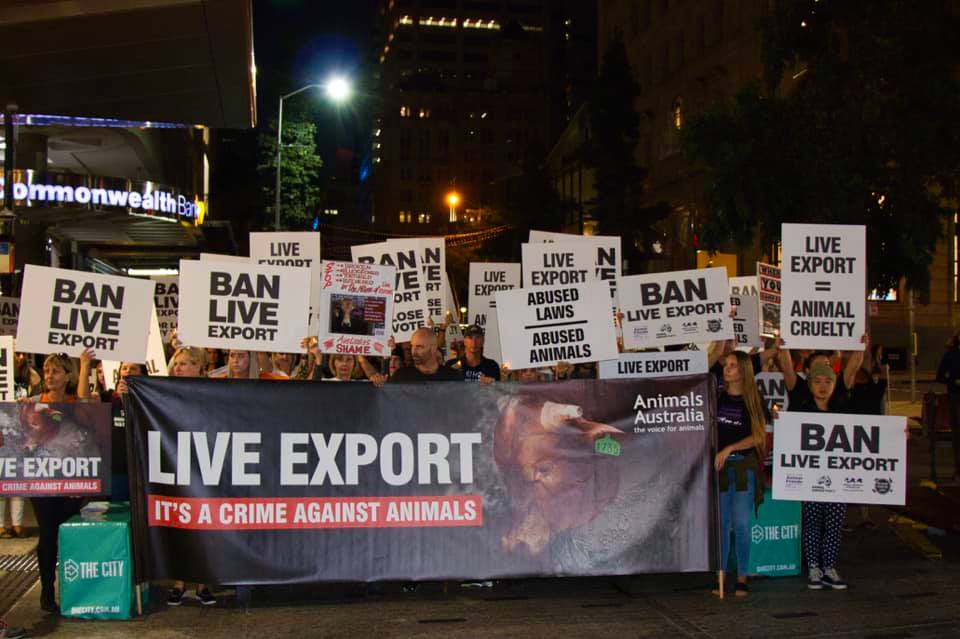 Stop Live Transport Day of Action Australia