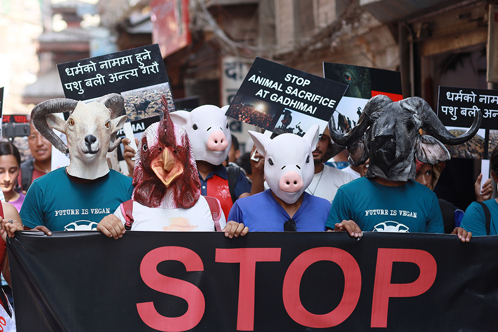 Stop Live Transport Day of Action Nepal