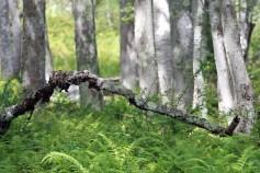 Dead Wood-Wells Estuarine Research Reserve