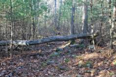 Minuteman Woods 4