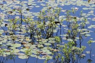 Reflections-Ipswich Audubon
