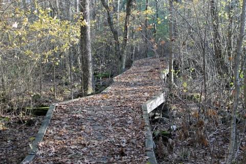 The Boardwalk Path 1
