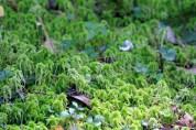 Ground Moss 2-Rachel Carson Reserve