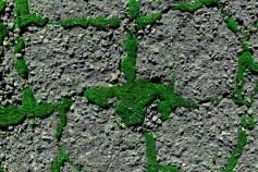 Street Moss 9