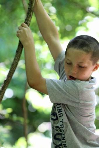 Jungle Boy-Ipswich Audubon