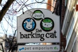 The Barking Cat