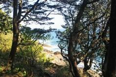 Trees and Water 5-Marginal Way