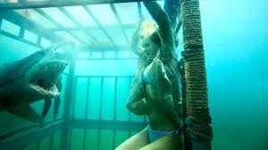 You think that cage will keep you safe as you degrade your self? Think again, Shark-Food!