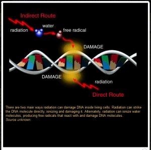 Free Radical damages DNA