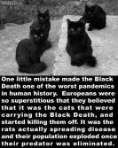 Cats - Black mistake