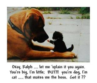 Dogs - Cats 08