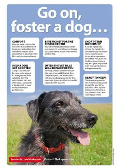Dogs - Foster a dog
