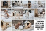 Dogs - Medical chained outside in the cold