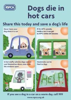 Dogs - Medical hot car safety 11