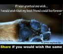 Dogs - Wish best friend to live forever