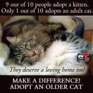 Homeless pets - Help adopt senior cat