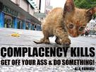 Homeless pets - Help complacency kills