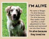 Homeless pets - Help foster ALIVE because