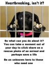 Homeless pets - Help heartbreaking isn't it