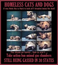 Homeless pets - Kill gassing still in 30 states