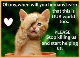 Homeless pets - Kill stop ginger kitten