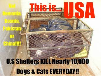 Homeless pets - Kill USA not E Europe or India