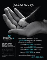 Homeless pets - NYC AC&C ad poster