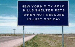 Homeless pets - NYC AC&C blue road sign