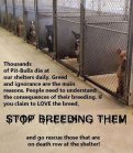 Mills farms breeders - 2 Don't buy which dog kill first USE