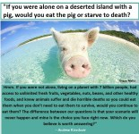 Factory farming - pigs alone on a desert island