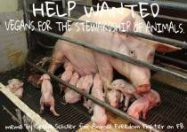 Factory farming - pigs in battery cage