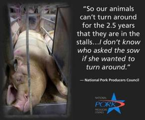 Factory farming - pigs stalls can't turn around for 2.5 yrs