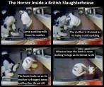 Factory farming - Slaughterhouse UK