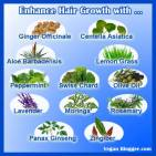 Message - Foods beneficial herbs for hair